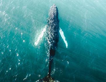 golfinhos-islandia